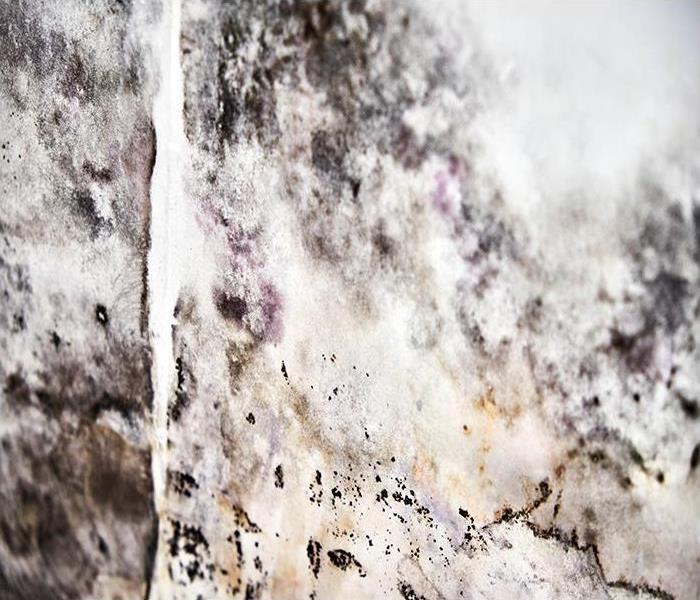 Mold Remediation If You Have A Mold Issue In Your Harriman Home Our Specialists Can Help!