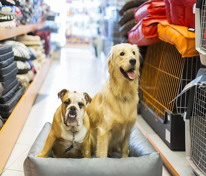 Commercial Commercial Water Damage And Your Harriman Pet Supply Store