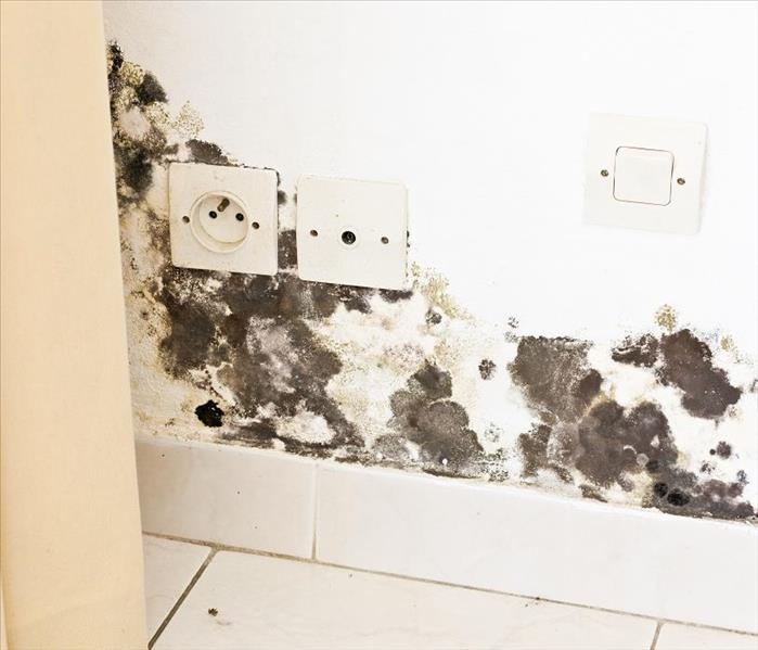 Mold Remediation How to Manage Mold Damage in Lenoir City