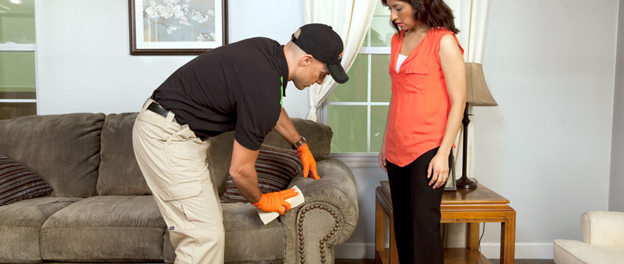 Lenoir City, TN carpet upholstery cleaning